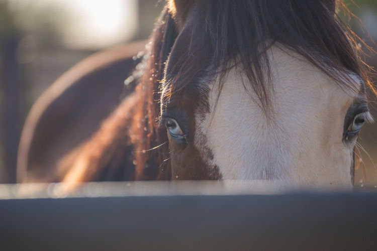 Brown and white horse with beautiful blue eyes looking closely at camera from inside a corral. Blue Eyes Horse Life Horses Animal Animals Animals In Captivity Equestrian Equestrian Life Equine Equine Photography Eyes Horse Horse Photography  Portrait Powerful