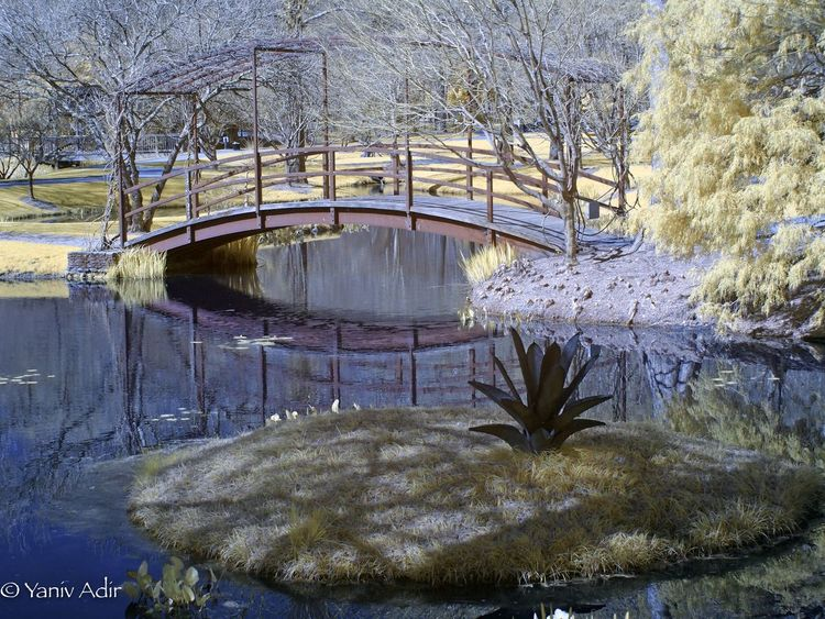 Bridge. Bridge Gibbs Gardens Color Infrared Olympus Infrared Olympus Pen Olympus Infrared Photography Infrared Day Growth No People Outdoors Tree Plant Nature Architecture Water