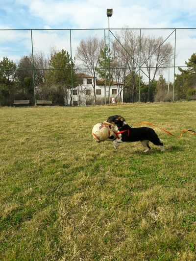 View of dog playing with ball on field