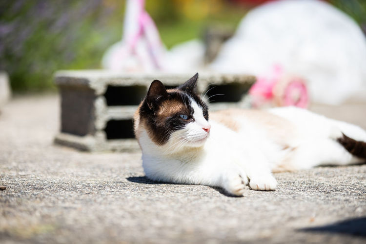 Close-up of a cat sitting on footpath