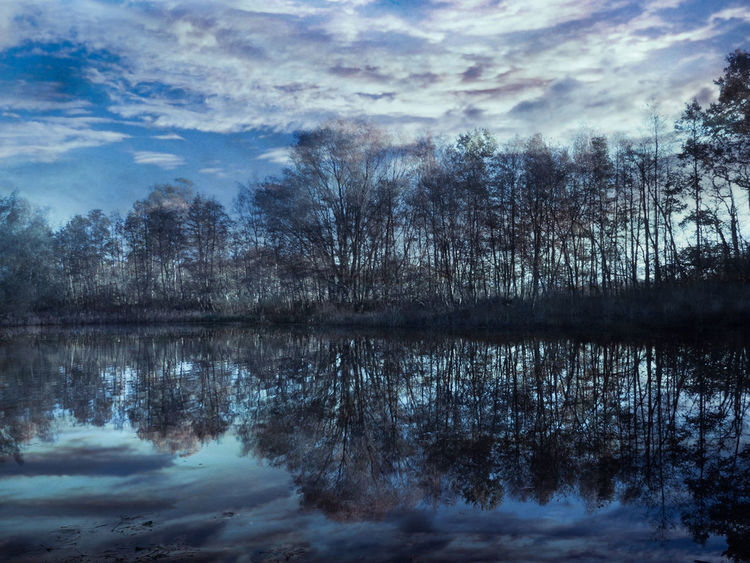 Water Tree Tranquility Tranquil Scene Sky Reflection Lake Cloud - Sky Betterlandscapes Bare Tree Beauty In Nature Nature Scenics Peaceful Landscape Landscape Scenery Clouds And Sky Beautiful Nature Outdoors Scenic View Tree And Sky Lake View Blue Sky Blue Sky And Clouds Reflections