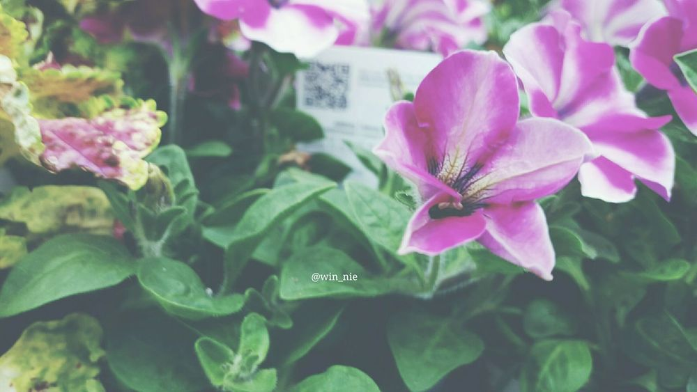 Flowers Eeyem Photography Violet First Eyeem Photo it loooked nice