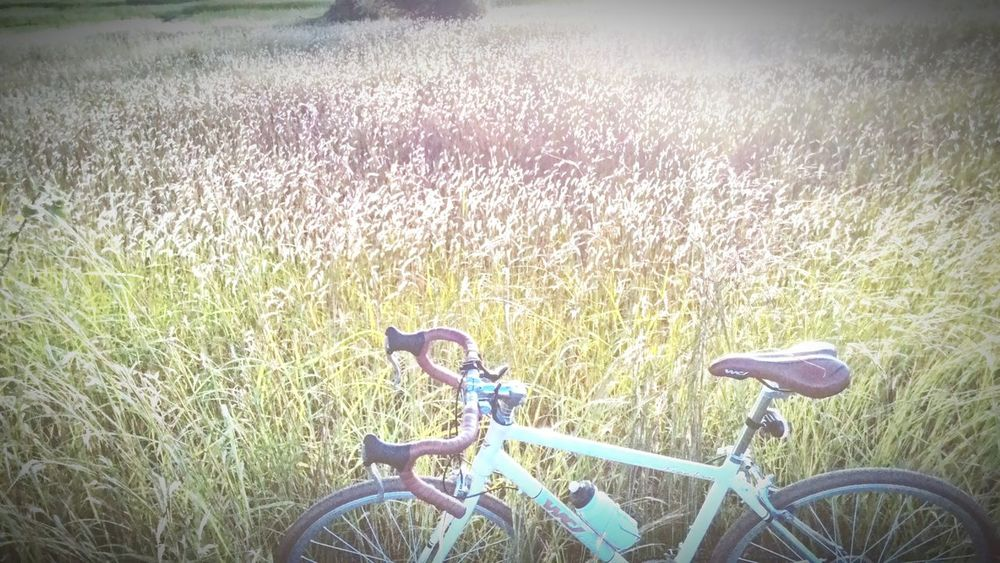 Relax time Bike Bike Ride Bikecycle Hipster Field Sunshine Evening Morning Light Light And Shadow Lifestyle Enjoy Fun