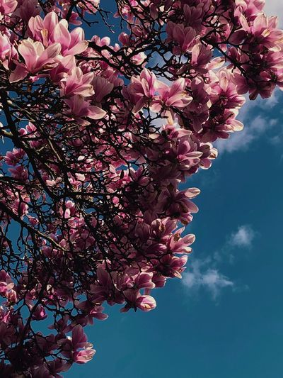 Frühling Plant