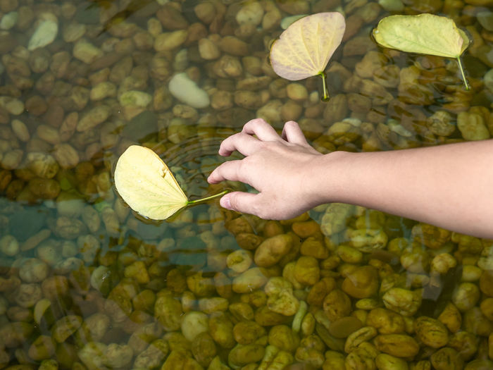 Young Asian girl hand touch yellow leaf that float on water surface. A clear water could transparently look down to rock in water. Hand One Person Human Body Part Leaf Water Real People Day Holding Nature Women Leisure Activity Outdoors Human Limb Finger Freshness Lifestyles Transparent Fall Float Rock Stone Decoration River Pond Pool