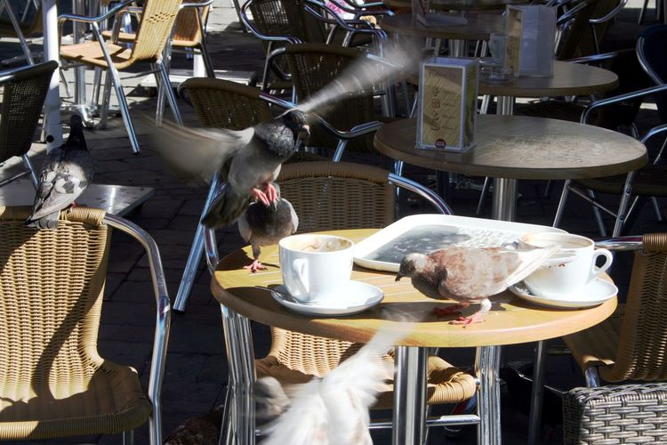 Birds feeding at a table before the waiters cleared it at an outdoor restaurant in Gibraltar. Birds Flying Group Of Birds Animal Themes Birds Birds Feeding Birds Feeding At Outdoor Restaurant Cup And Saucer Cups Food Food And Drink No People Pigeons Saucers Tables And Chairs Outside Teacups