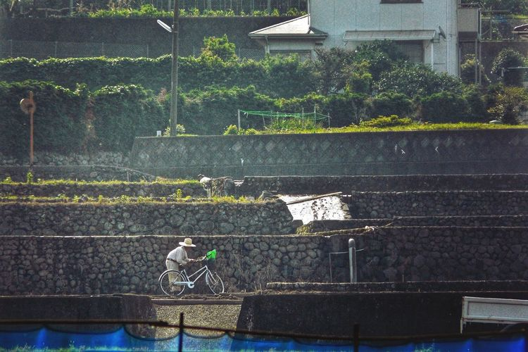 Oldmans Working Early Morning : Rice Terraces Japan Scenery Agriculture Ordinarypeople Unzen City. Nagasaki prefecture Urban2filter Zoomzoom Panasonic  LUMIX FZ18