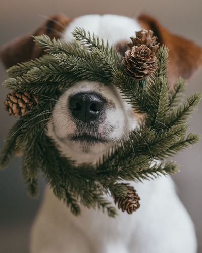 Close-up of dog with christmas decoration on face