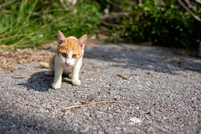 Alertness Animal Animal Head  Animal Themes Cat Close-up Domestic Animals Domestic Cat Feline Focus On Foreground Ishigaki  Japan Mammal One Animal Pets Portrait Whisker