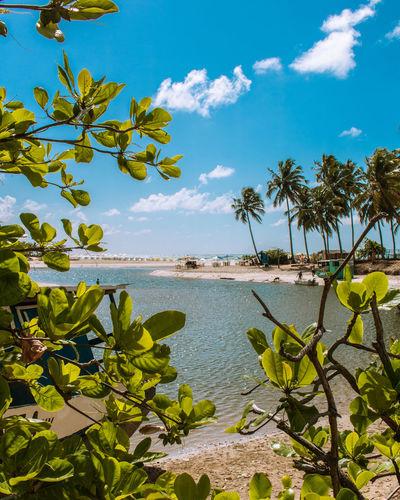 Windows of Brazil. Photography Brazil Travel Destinations Blue Natureza Traveller Photo Beachphotography Nature Brasil Fotografia Maceió Tropical Tree Coconut Palm Leaf Caribbean Lagoon UnderSea Seascape