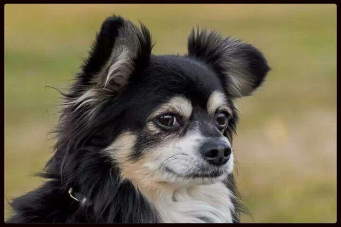Cassius Dog Hund Tiere Animals