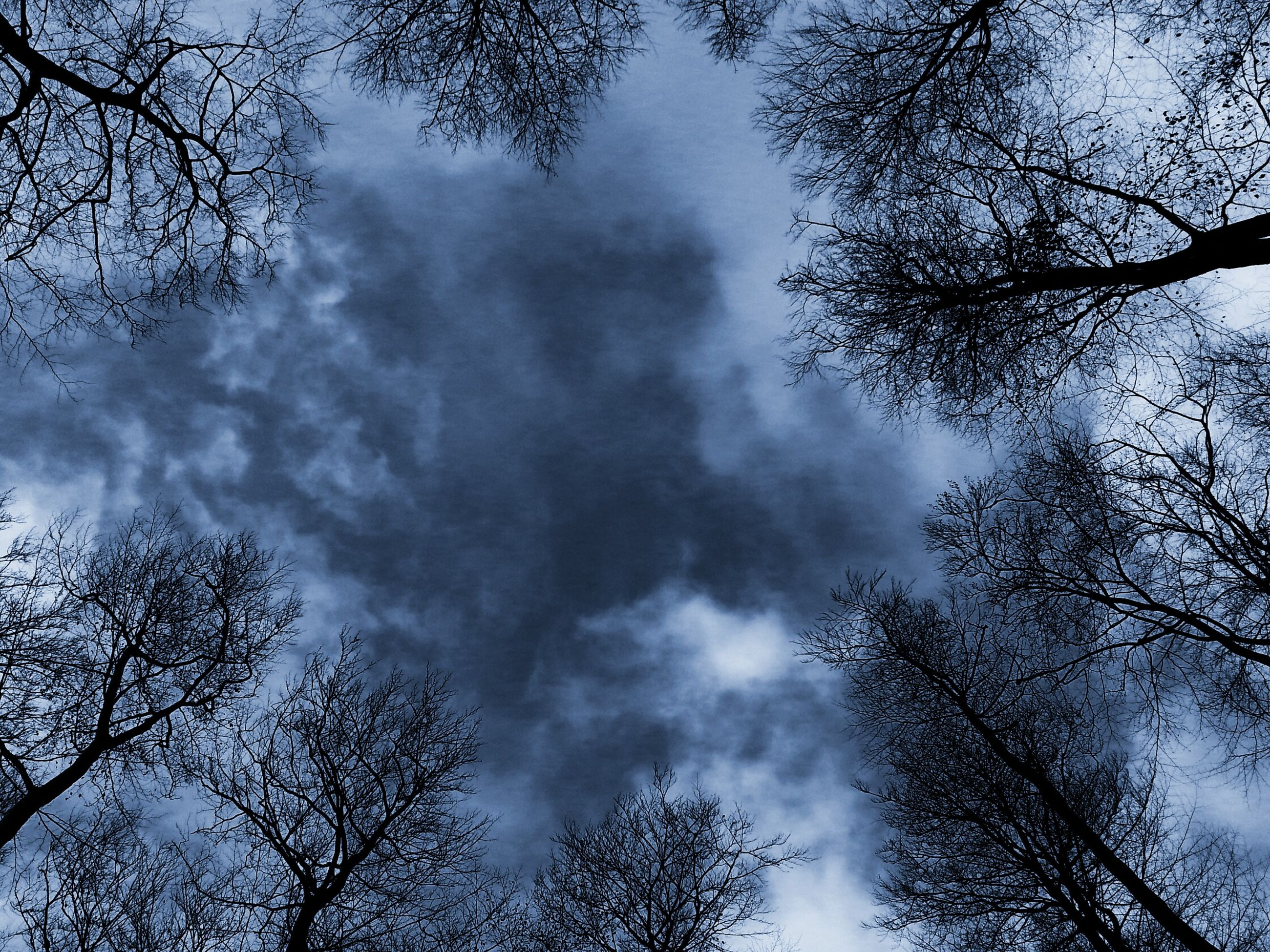 low angle view, tree, sky, branch, cloud - sky, bare tree, cloudy, silhouette, tranquility, nature, beauty in nature, scenics, cloud, tranquil scene, high section, growth, treetop, outdoors, no people, day