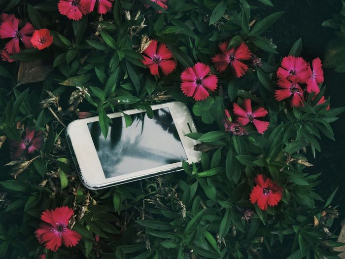 High angle view of phone on flowers