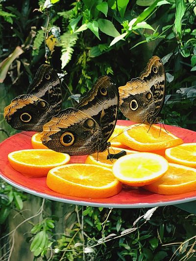 Vertebrate Animals In The Wild One Animal No People Nature Orange Color