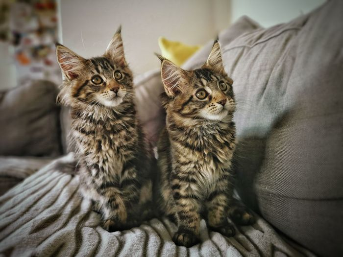 Portrait of cats relaxing at home