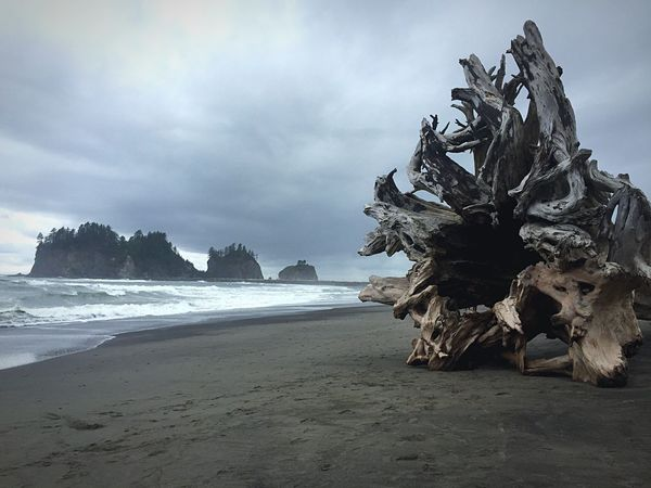 Beach Washington Ocean Tree Roots  Tree Sea Beach Sky Nature Beauty In Nature Sand Horizon Over Water Tranquility Cloud - Sky Water Outdoors Scenics