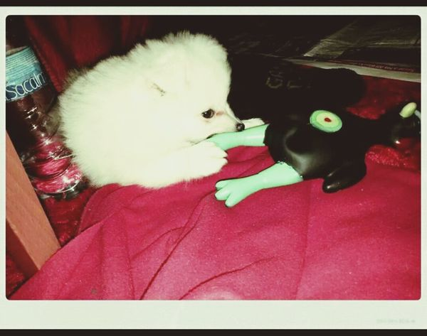 Mydog♡ Paxuka Myfamily Mylove