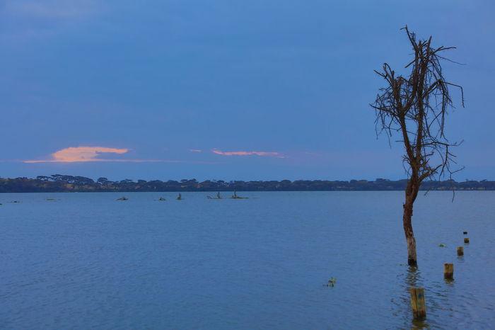 sunset on Lake Naivasha, Kenya Africa Blue Blue Hour Calm Calm Sea Calm Sea Enjoying Moonlight Calmness Kenya Lake Naivasha Landscape Meditation Place Meditation Time Rhapsody In Blue Scenics Solitaire Tree Sunset Lake Naivasha Tourism Tranquility Waterfront