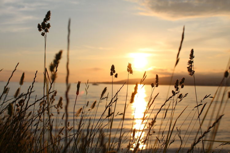 Beauty In Nature Grass Growth Herb Herbs Nature No Effects No Filters  No Filters Or Effects Outdoors Plant Scenics Sea Sea And Sky Seascape Seascape Photography Sky Sun Sun And Clouds Sunset Sunset And Sea Tranquil Scene Tranquility Water Waterscape
