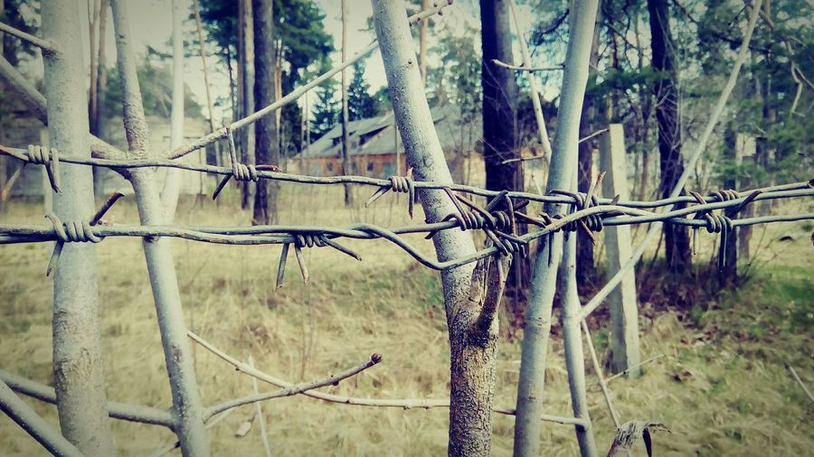 Nature No People Outdoors Beauty In Nature Minsk Wire April Fence Safety Barbed Wire Rusty Prison Forbidden