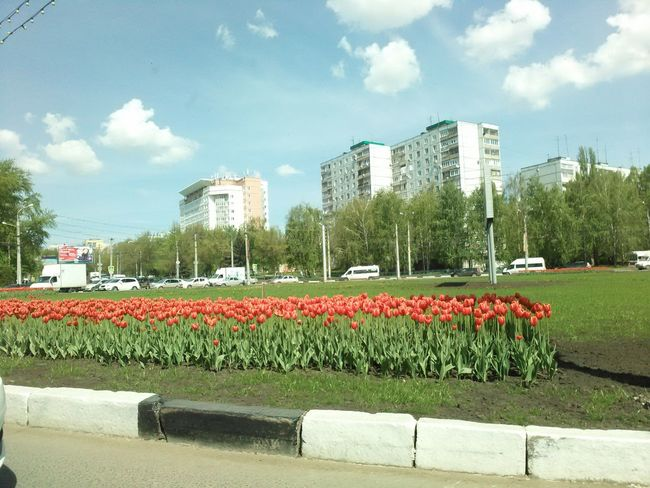 red flowers tulips, spring in the city, a beautiful route