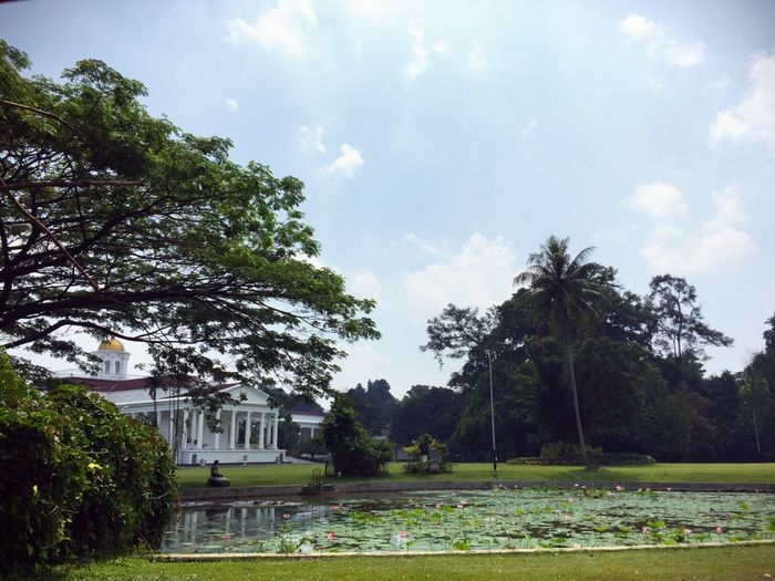 The Bogor Palace Istana Bogor Morning Freshness Pure Bogor Indonesia INDONESIA Plant Tree Sky Cloud - Sky Grass Architecture Nature Growth Day Green Color Built Structure Park Building Exterior Park - Man Made Space No People Beauty In Nature Garden Outdoors Tranquility Field