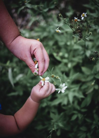 Touching Photography Streetphotography EyeEm Best Shots Lifestyles Human Hand Hand Human Body Part Holding Plant Real People Flower Body Part Human Finger Close-up Flowering Plant Finger Day Nature Outdoors A New Beginning Moms & Dads