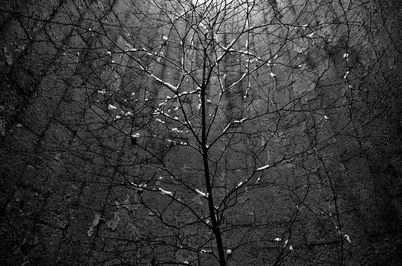 Bare tree at night