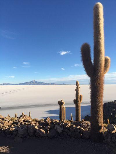 Cactus Against Blue Sky At Desert