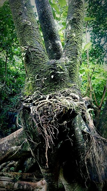 Nature Tree Moss Nature Photography Nature Beauty What I See Daraitan Tanay Rizal Nature's Diversities The Following