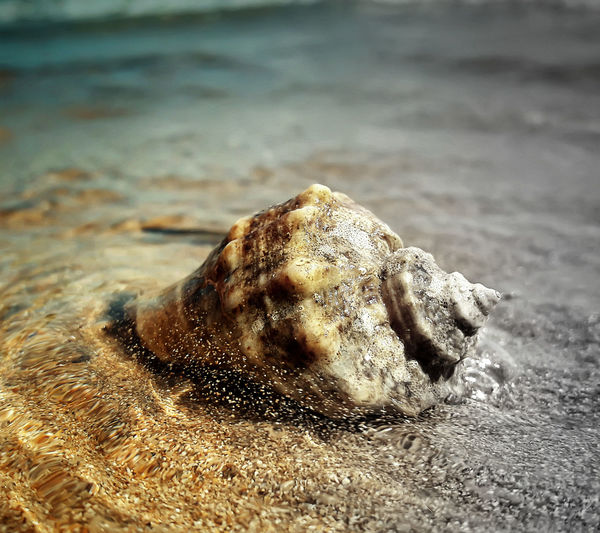 seashell Animal Head  Beach Brown Close-up Day Focus On Foreground Messy Nature Non-urban Scene Outdoors Purity Sand Scenics Sea Shore Tourism Tranquil Scene Tranquility Vacations Water Wave Zoology