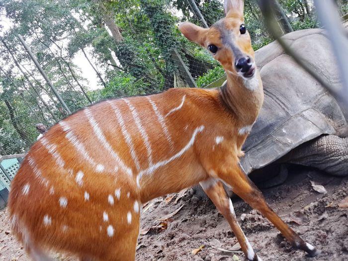 Surprise Biche Africa Zoo Eyes Cute Wild Love Cotedivoire Instamood