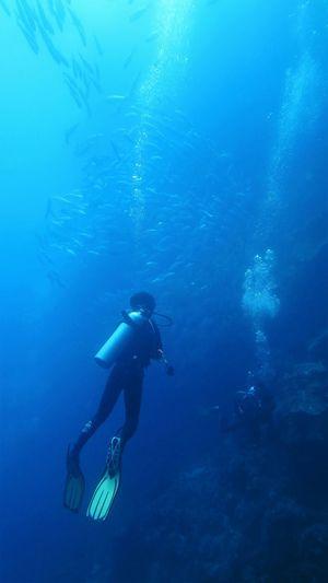 Panglao Bohol Philippines Diving Jackfish First Eyeem Photo Balicasag