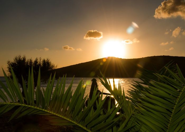 Sunrise Enjoying The Sun Landscape Coastline Holiday Crete Greece Light Palm Tree