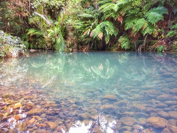 Waterhole Reflection No People Swimming Floating On Water Clean Water Beauty In Nature Tranquil Scene Native Bush Tree Fresh Water Crustaceans Fresh Water Fish New Zealand Impressions Exploring Nature Nature Photography Ferns
