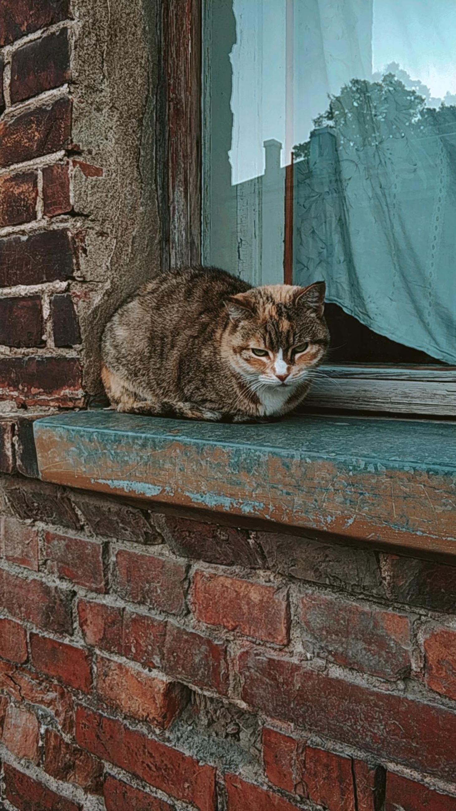 cat, domestic cat, feline, mammal, domestic, pets, one animal, domestic animals, animal themes, animal, wall, vertebrate, relaxation, wall - building feature, brick wall, brick, no people, architecture, looking at camera, portrait, whisker, animal head, maine coon cat