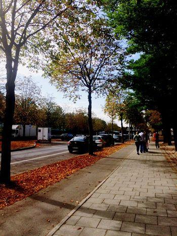 Autumn Autumn Colors Colors Of Autumn Autumn Leaves Beautiful Day