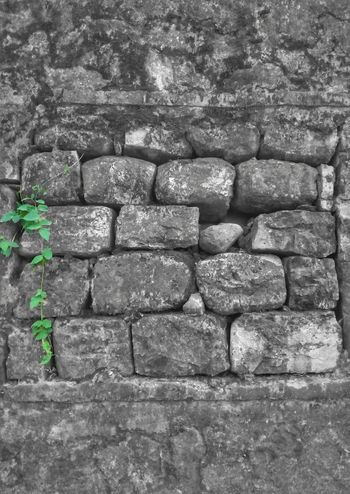 Color vs Blackandwhite Day No People Outdoors Architecture Background Bw Wall Stone Stonewall Resist Struggle For Life Struggle Streetphotography Old Buildings Mobography Mobilephotography Huaweiphotography PhonePhotography Smartphonephotography Plant Plant And Stone Place Of Heart