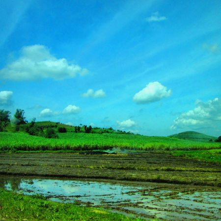 La Castellana, Bacolod Green Blue Sky Landscapes With WhiteWall Ricefield Beauty In Nature Nature Lover Blue Wave Skyporn Ricefield View EyeEm Nature Lover Nature Photography The Great Outdoors With Adobe