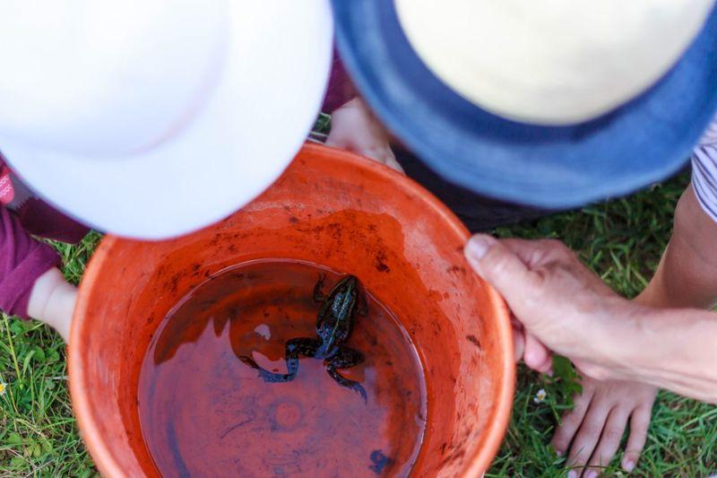 Neugier  Wasser Kinder Eimer Frosch Frog Children Childhood Human Hand Hand Human Body Part Real People Holding Day Nature
