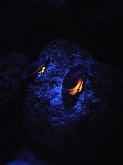 Vatoz Yumurtası Vatoz Viasea Akvarium Tuzlamarina #fish #Turkey Fishtank Turkey Tuzla #sea #photography #Nature  #mercan Exploration Underwater UnderSea Astronomy Night No People Star - Space