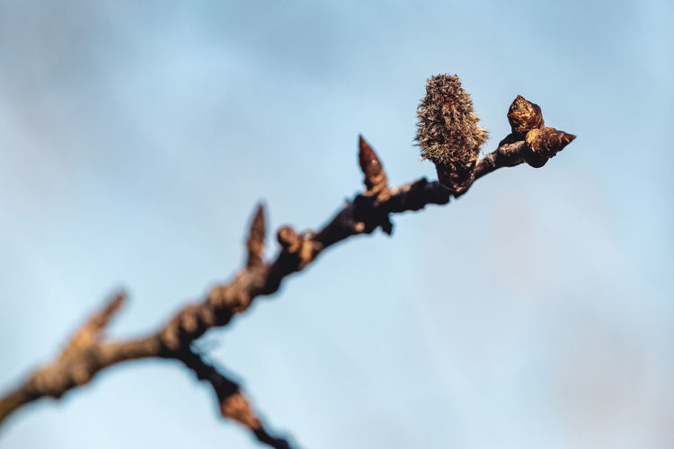 Low angle view of bud on branch