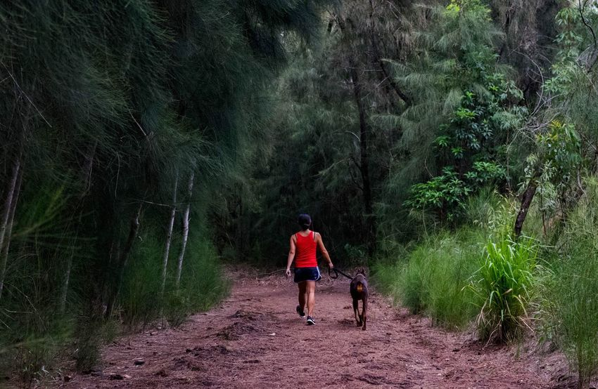People And Places dog walk Rear View Full Length Tree Walking The Way Forward Forest Men Leisure Activity Tranquil Scene Tranquility Tourist Togetherness Nature Non-urban Scene Scenics Tourism Footpath Remote Vacations Casual Clothing