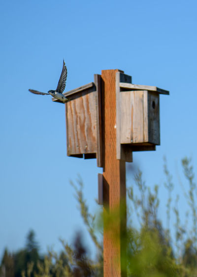 Low angle view of bird on wooden post against clear sky