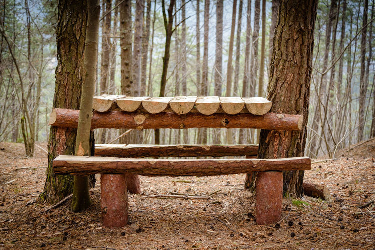 Erve Erve Miozzo Photo Miozzo Wood - Material Absence Nature Tranquility Empty Plant Seat Forest Tree Land Beauty In Nature Tranquil Scene Outdoors No People WoodLand Tree Trunk Trunk Bench Day Chair Park Bench