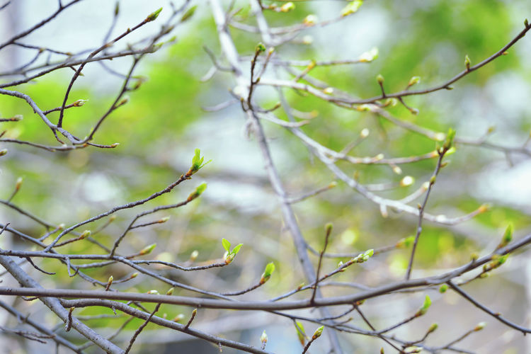 Low angle view of bare tree branches