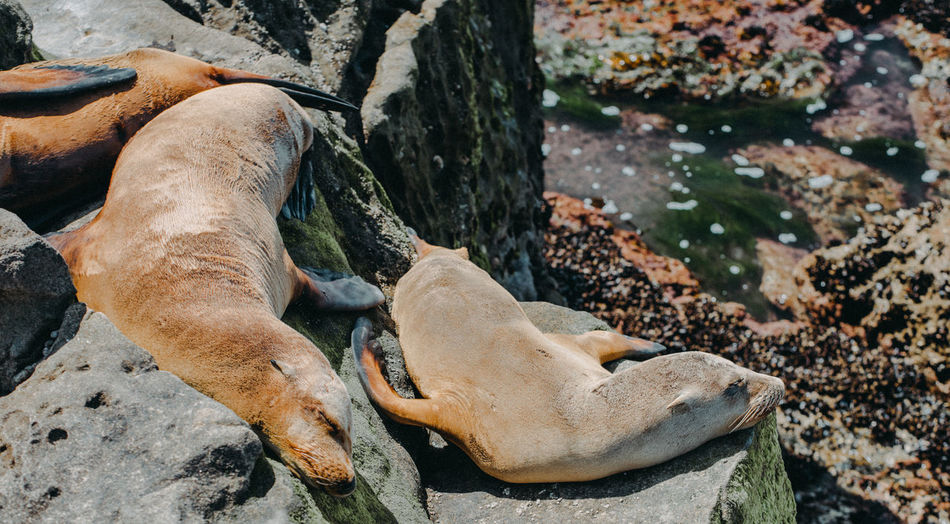 Animals In The Wild Nature Nature Photography Sea Lion Sea Lion Pup Sea Lions Summer Exploratorium Wildlife & Nature Wildlife Photography Animal Animal Photography Animal Themes Animal Wildlife Animals Natural Habitat Ocean Sea Seal - Animal Seals Sleeping Wildlife Wildlifephotography