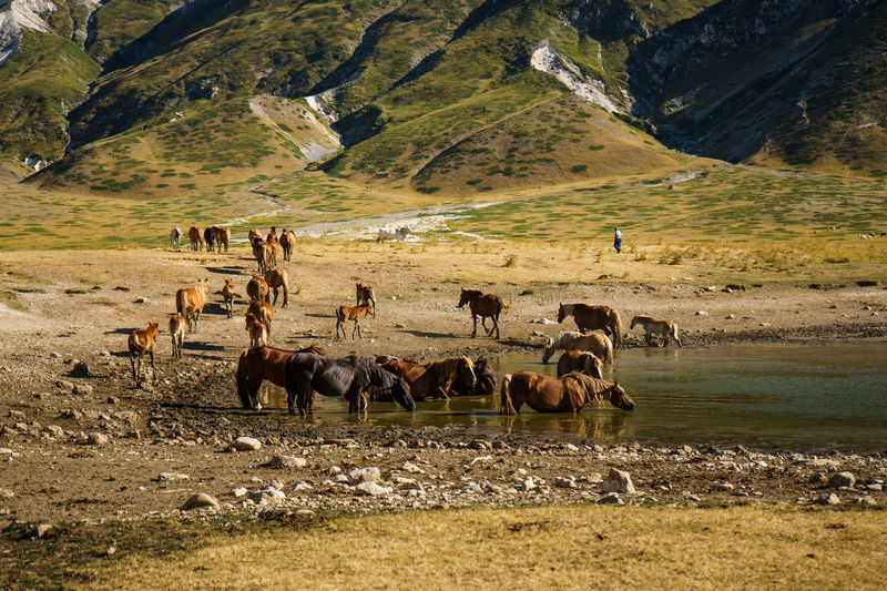 Horses Animal Themes Beauty In Nature Day Grass Lake Landscape Large Group Of Animals Mountain Nature Outdoors Scenics An Eye For Travel The Great Outdoors - 2018 EyeEm Awards