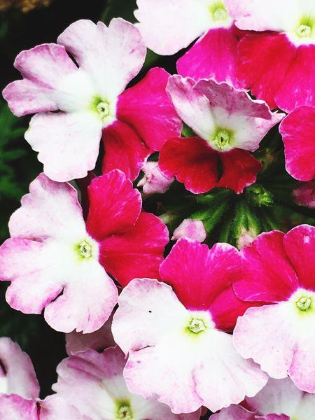 Pink Color Flower Circle Petal Girlhood