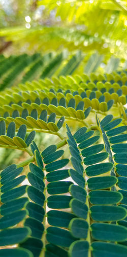 Fern Natural Pattern Full Frame Agriculture Close-up Green Color Plant Life Leaves